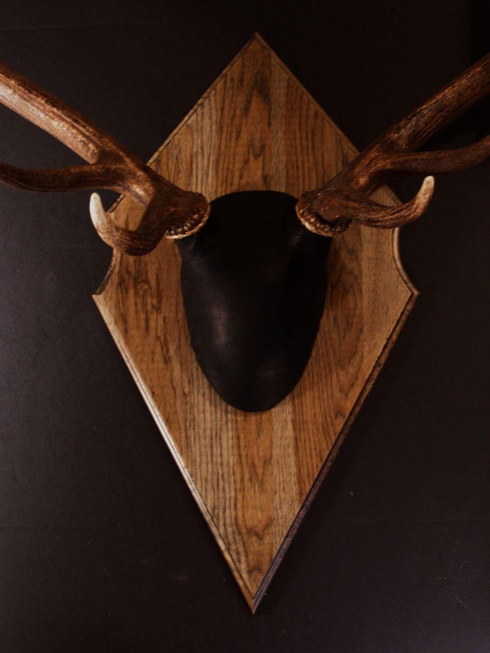 Antler Mount Kit- Outfitter Elk in 2020 | Antler mount ...