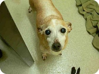 Mercy Mr. PERCY Needs a Home he is in a kill shelter that only keeps them a short time