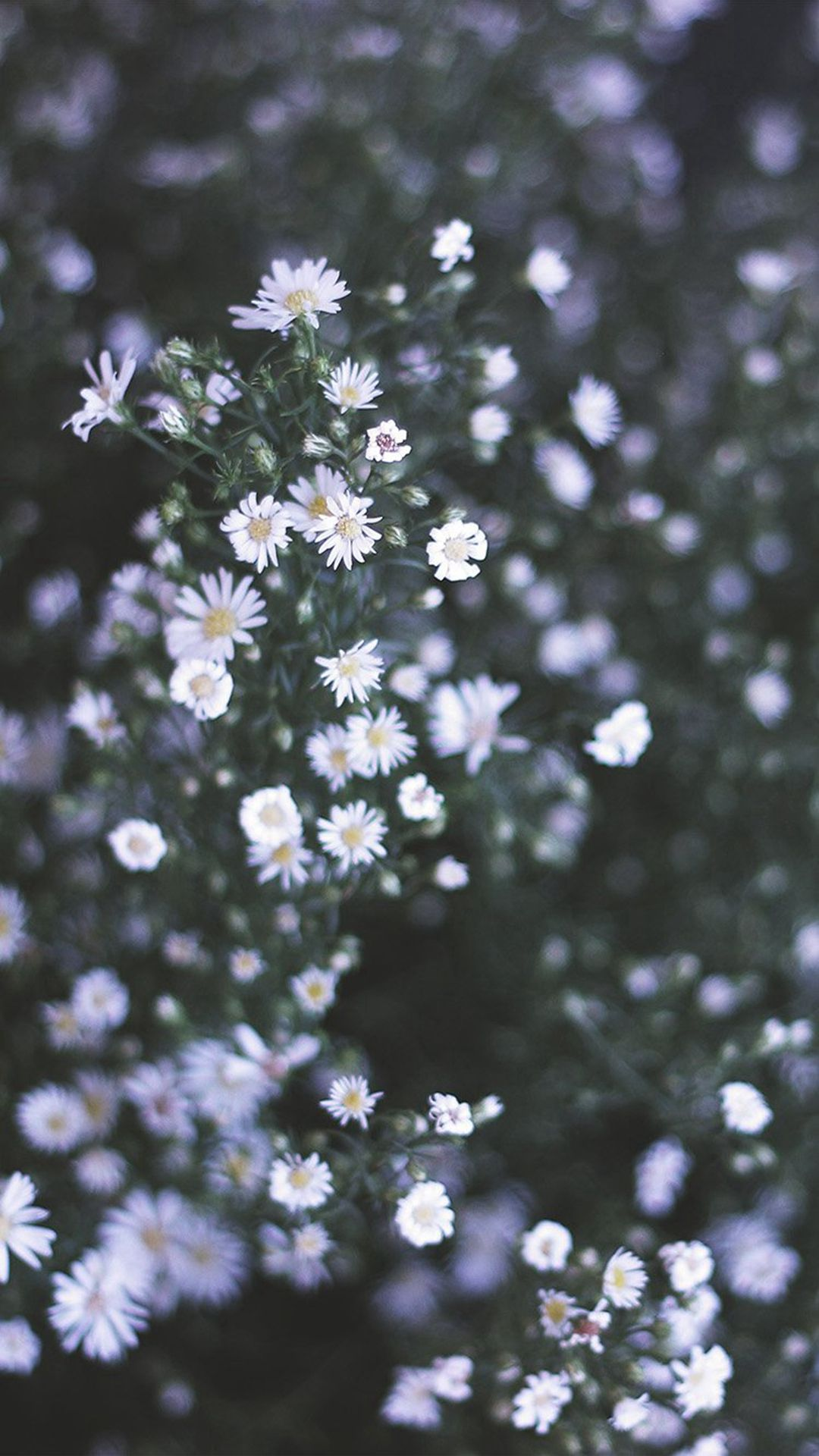Flower White Spring Nature Iphone 6 Wallpaper Iphone 6