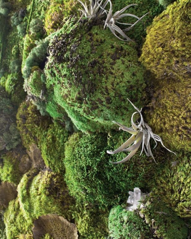 Learn How To Make A Faux Living Moss Wall With Tips From Tara Heibel Tassy De Give Of Sprout Home And The Experts At Moss Wall Moss Wall Art