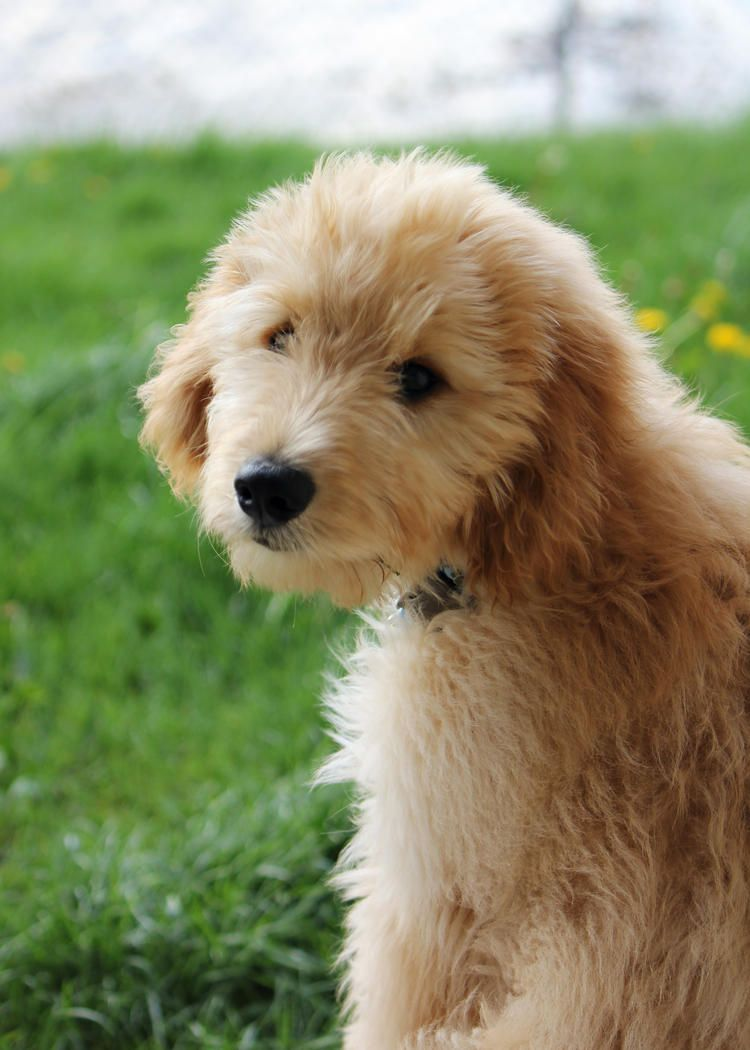 Love so much animals pinterest puppy pictures and animal