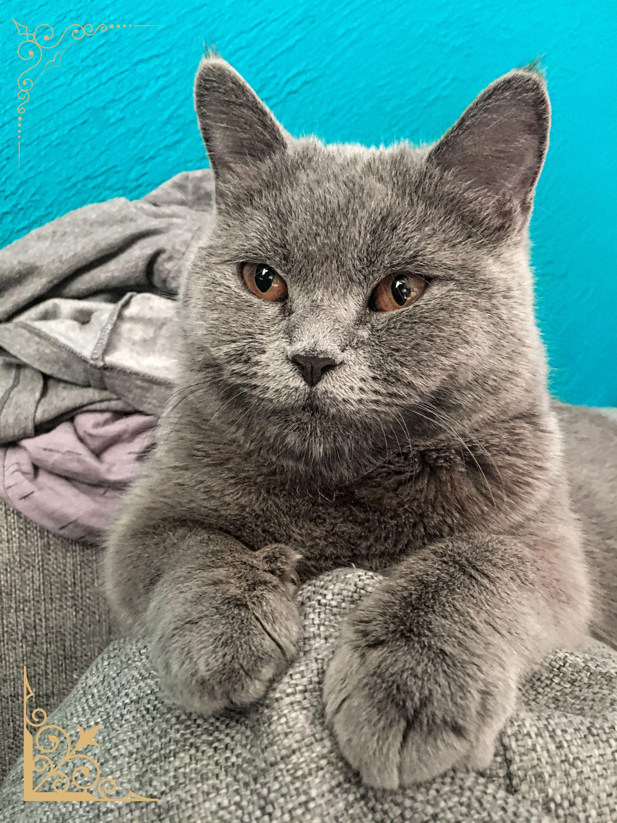 #kittensofinstagram #catlove #cutecat #animal #petstagram #ilovemycat #kittycat #dog #catsofig #catloversclub #instagood #ilovecats #blackcat #dogsofinstagram #catsofinsta #katze #catslover #caturday #catsoftheworld #photooftheday #catphoto #chat #catsofworld #neko #katzen #catsoftheday #features #catscatscats #nature #gatosdeinstagram
