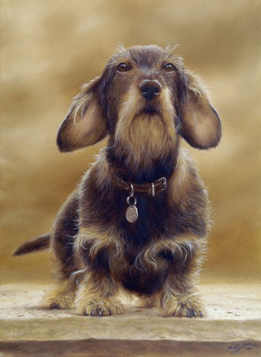 Wire Haired Dachshund With Images Wire Haired Dachshund