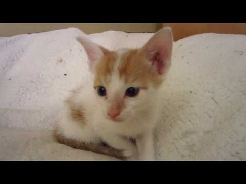 853 Tiny Foster Kitten All Alone On A Big Dog Bed 4 Weeks Old Youtube Foster Kittens Big Dog Beds Big Dogs