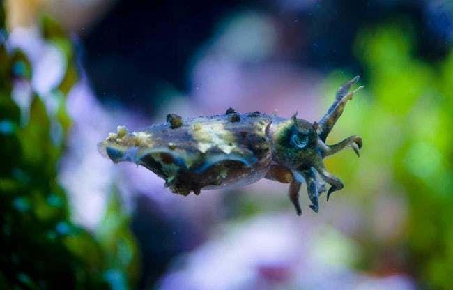 75+ Stunning Oceanic Invertebrates That Deserve A Closer