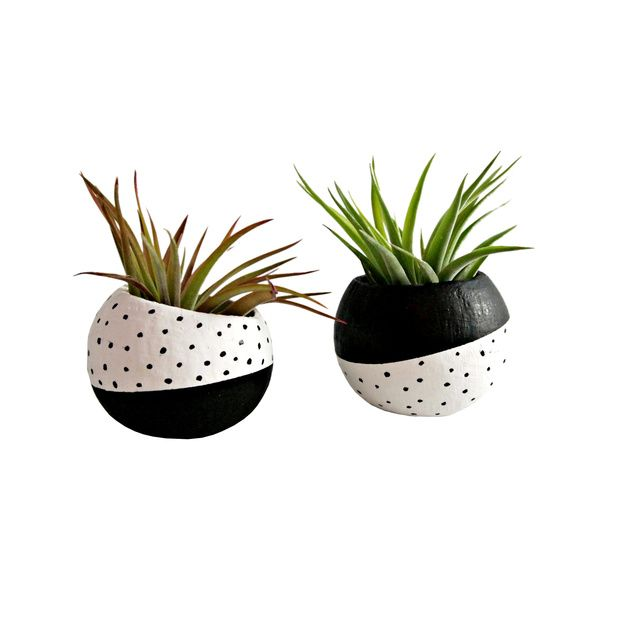 air plants
