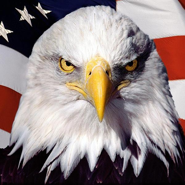 Bald Eagle Flag Canvas Set - American Flag Art, American Home Decor, Eagle Art