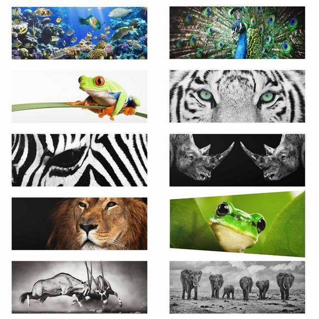 Photo of Buy Worlds of Images Glass Picture Panorama Quer »Top Animals Glass Pictures« online OTTO