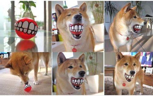 nice ball for dogs