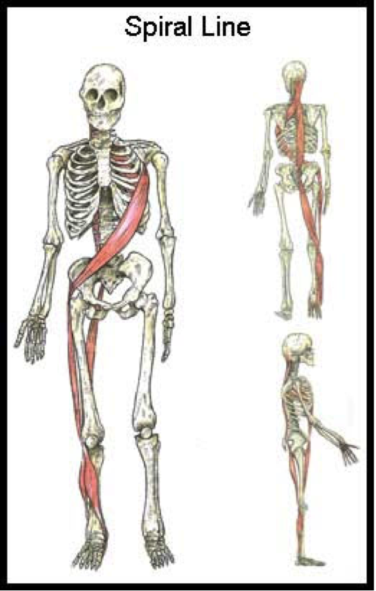 SFMA and Anatomy Trains: Concepts For Assessment and Treatment ...