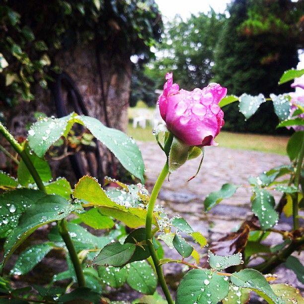 Asturias ♡ Garden