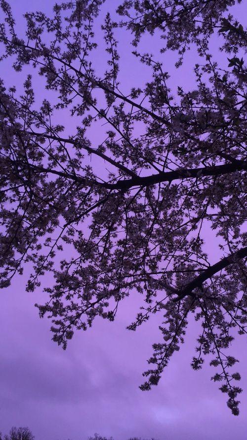 Tree Lavender And Purple Image Purple Wallpaper Purple Wallpaper Iphone Lavender Aesthetic Beautiful purple wallpaper hd