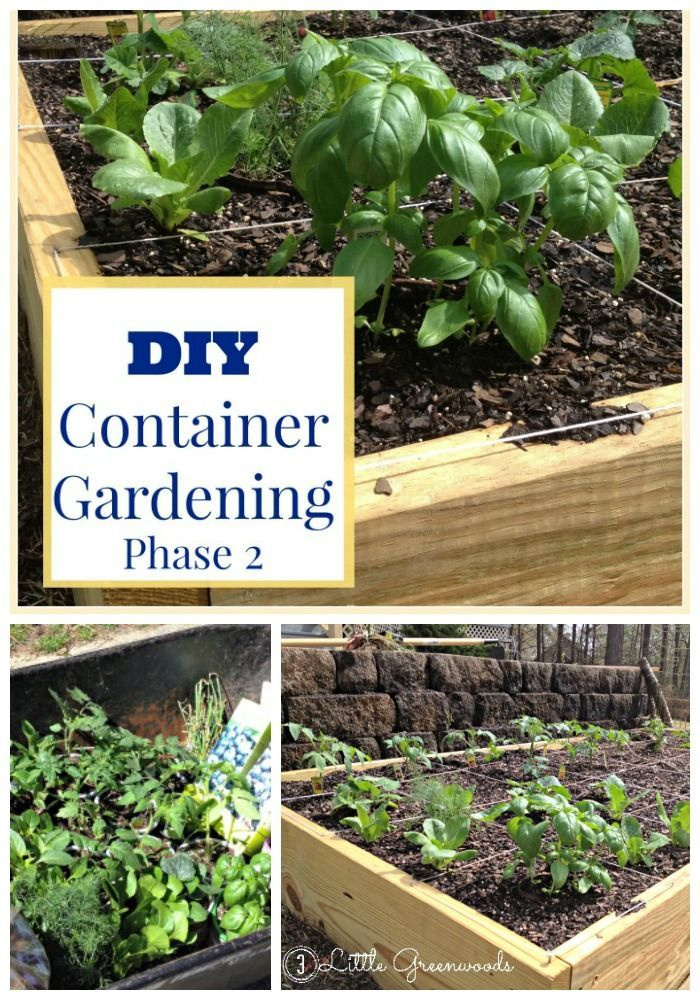 Must Have Tips for Planning and Planting a Vegetable DIY Container