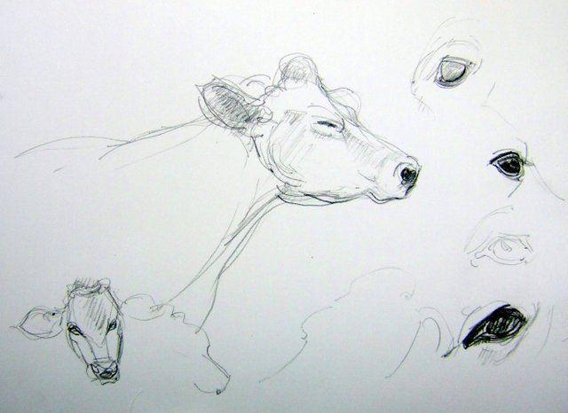 Bocetos Animales Res