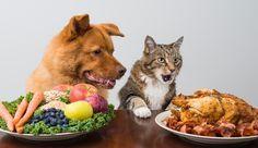 30 aliments dangereux pour chiens et chats