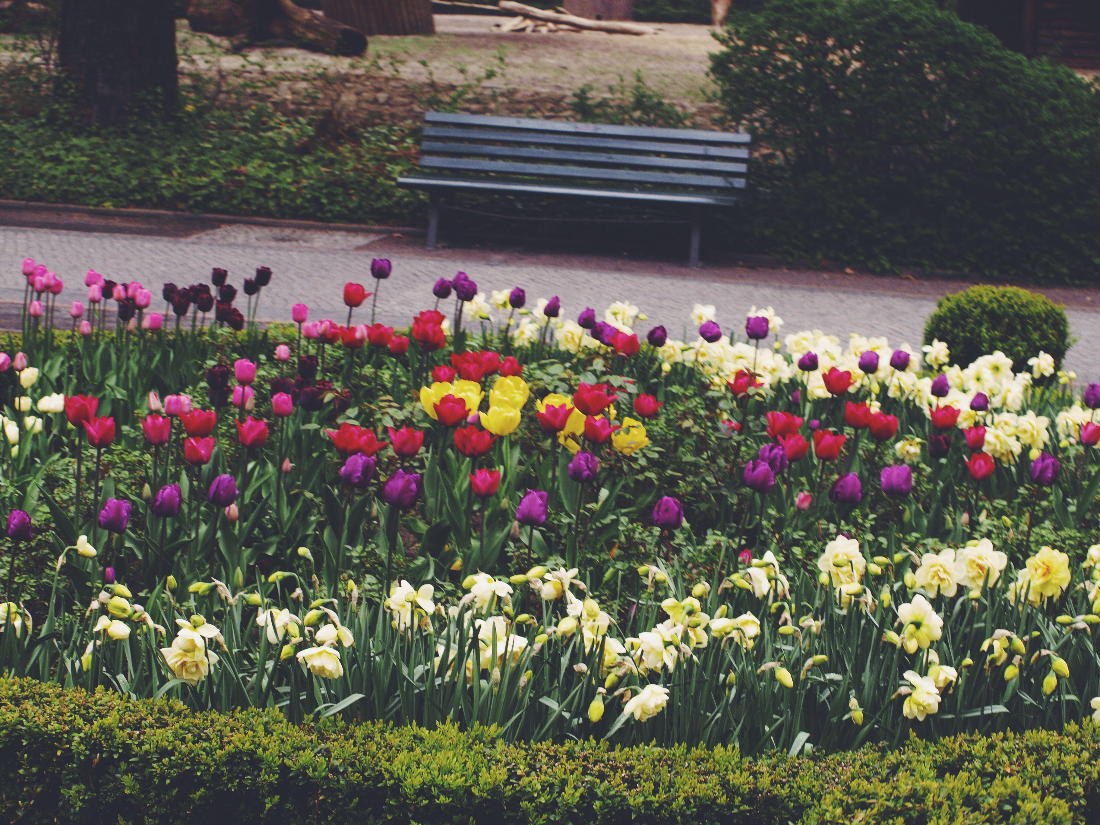 Springtime in Berlin