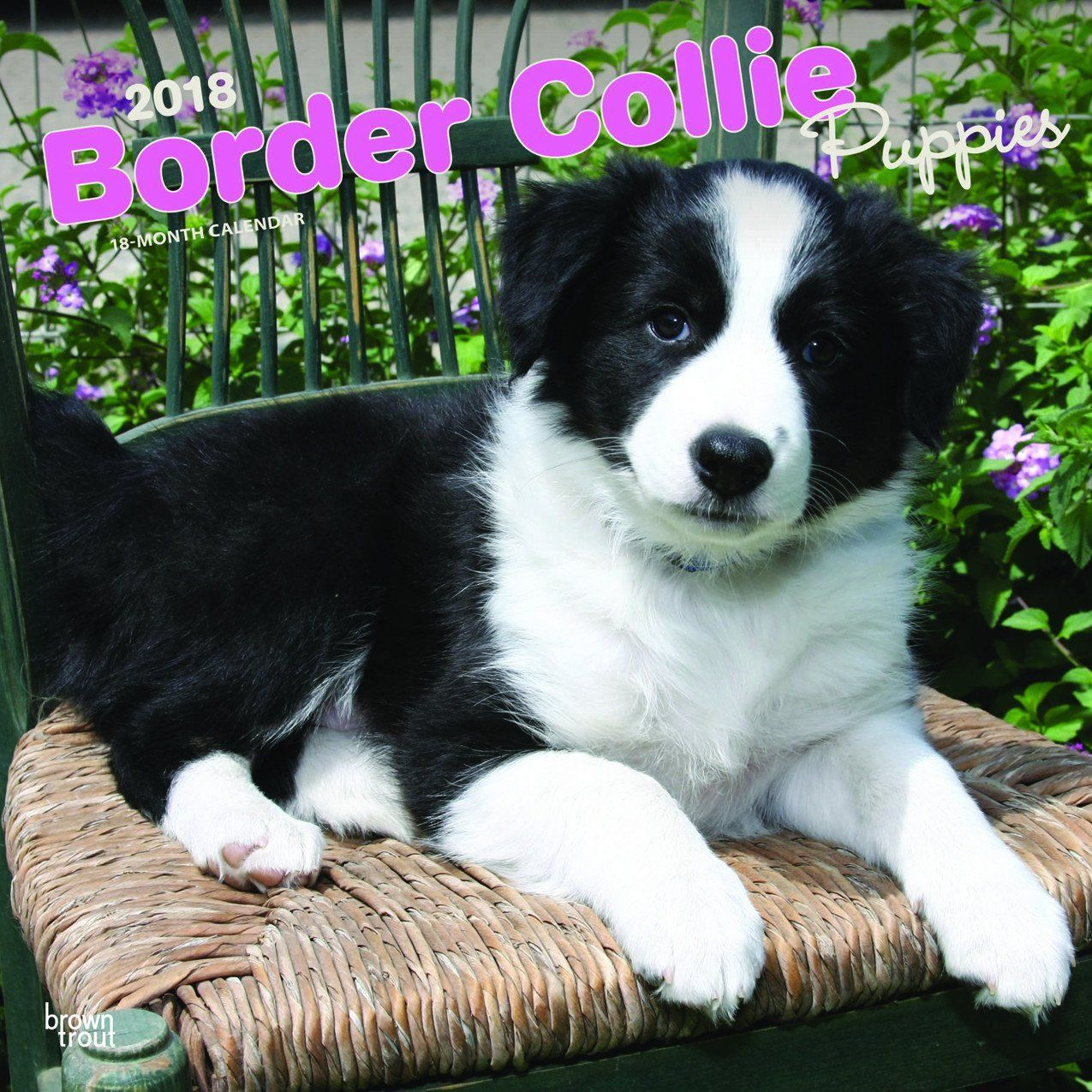 Border Collie Puppies 2018 Wall Calendar Bordercollie Border