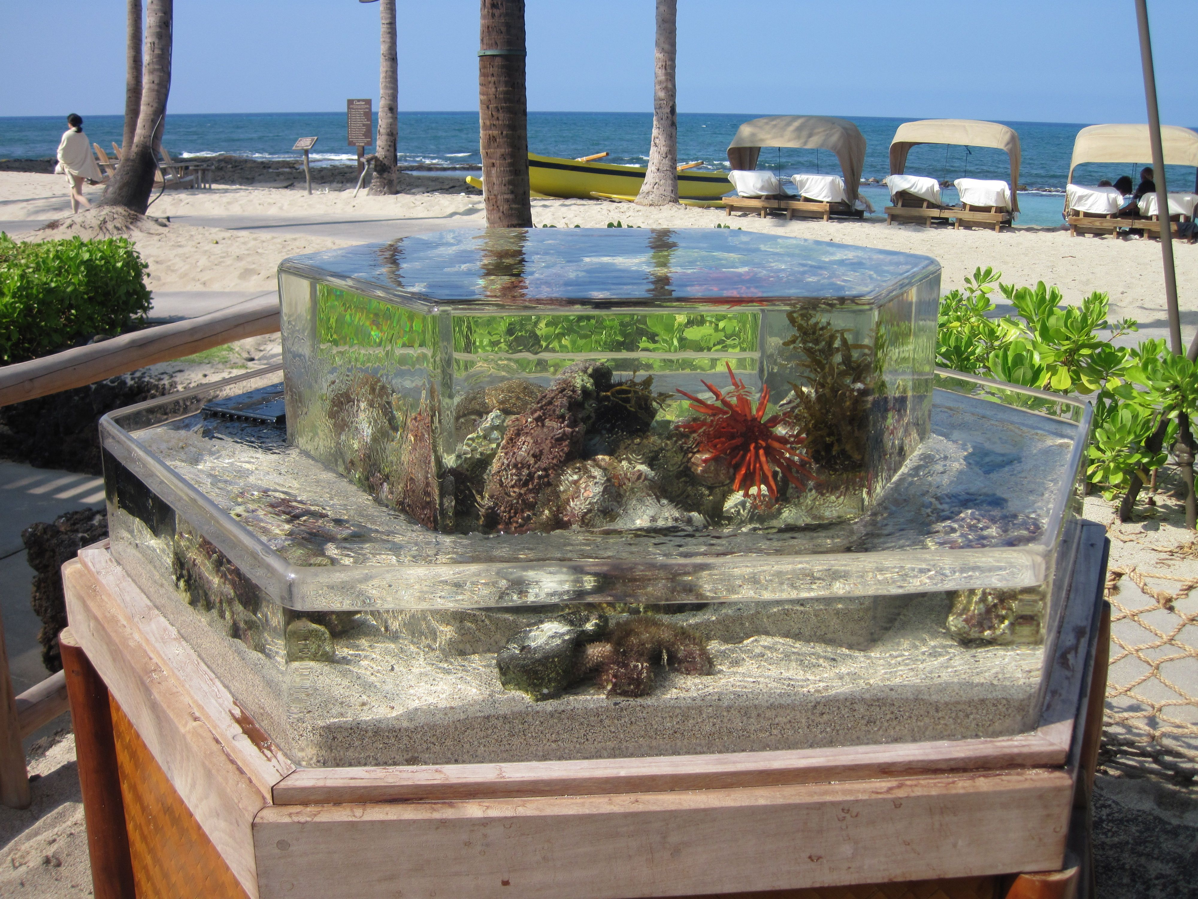 ZeroEdge Touch Tanks are great for interactive educational experiences and can be found at public aquariums and resort settings like this Hexagon located next to the beach at the Four Seasons Resort in Hawaii.