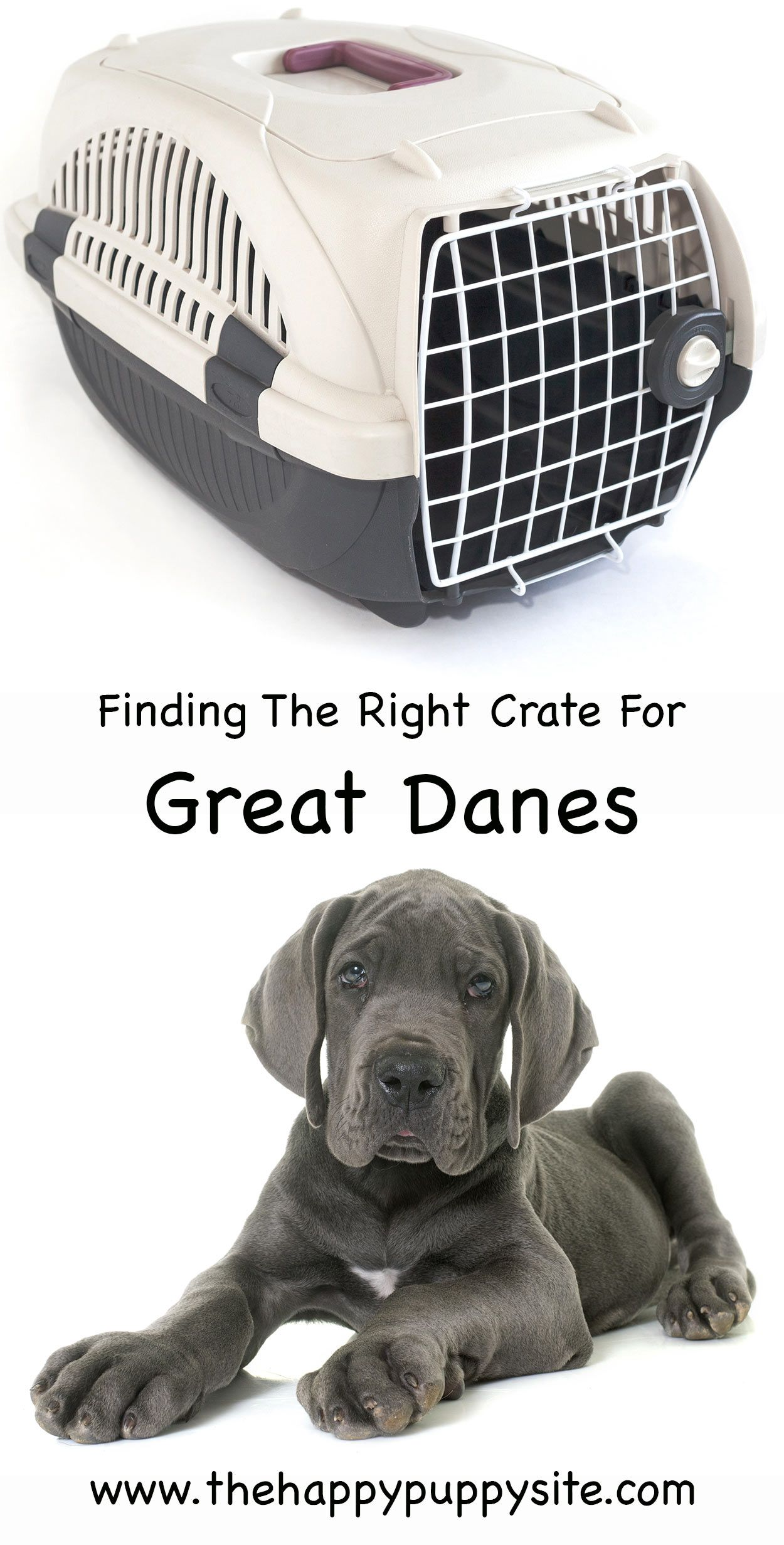 The Very Best Great Dane Crates For Your Giant Dog Breed Great