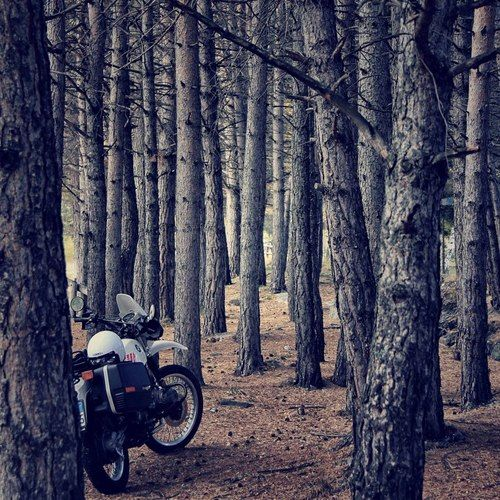 Bmw R80 Gs Hans Had First Come To This Forest When His Gs Was New