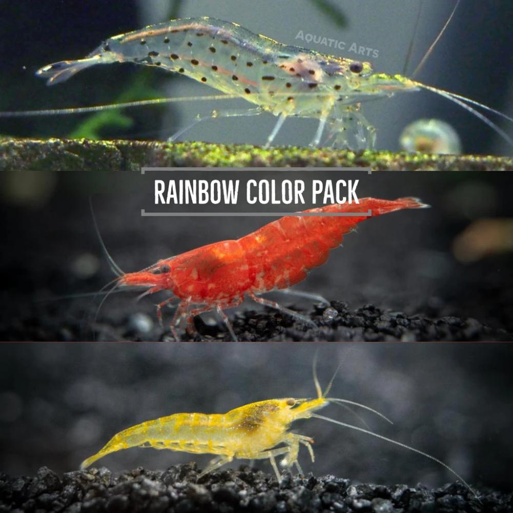 Dwarf Shrimp Rainbow Combo Pack 3 Red Cherry Shrimp 3 Neon Yellow Shrimp 3 Amano Shrimp In 2020 Red Cherry Shrimp Cherry Shrimp Amano Shrimp