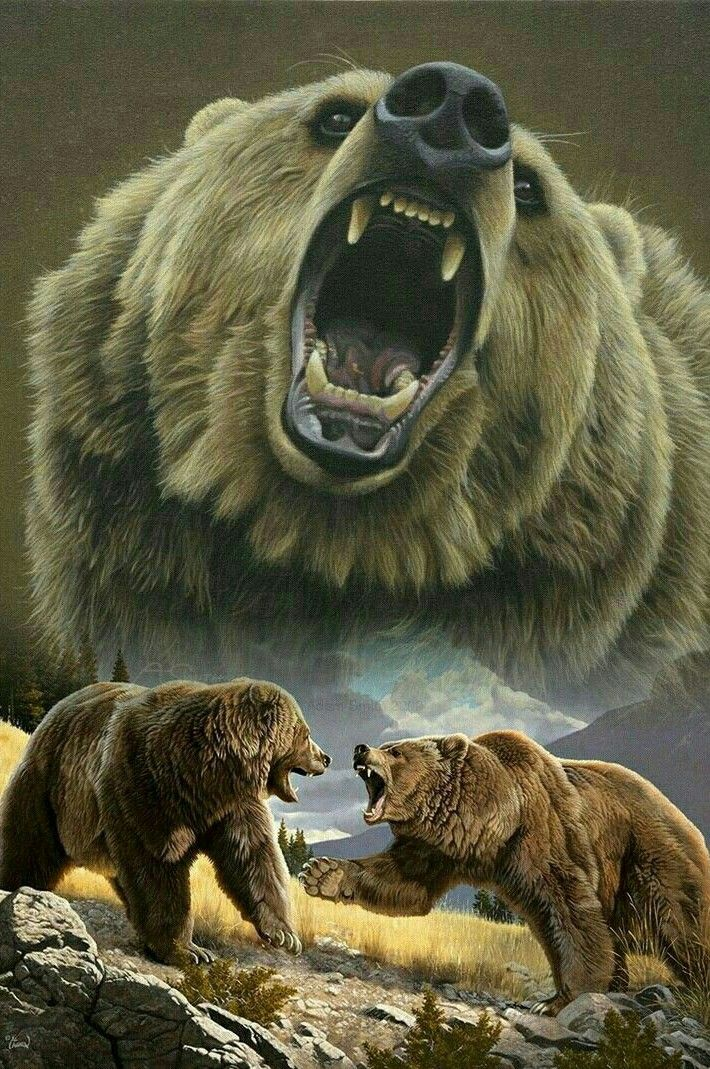 Wars Bären grizzly wars bären bears bären