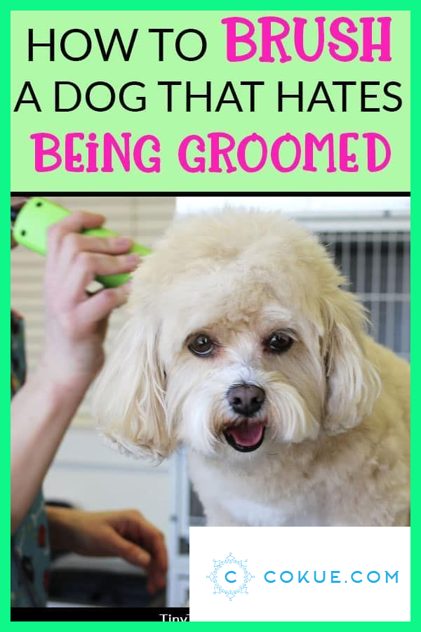 How To Raise A Pet Hedgehog Dog Grooming Styles Dog Care Tips Puppy Grooming