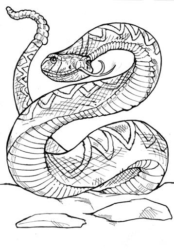 Rattlesnake Jpg 358 512 Snake Coloring Pages Coloring Pages Snake Drawing