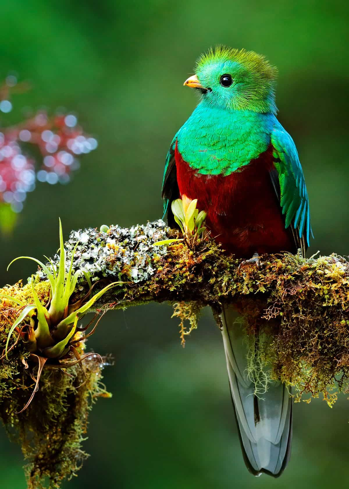 26 Of The Most Colorful Birds On The Planet And Where To