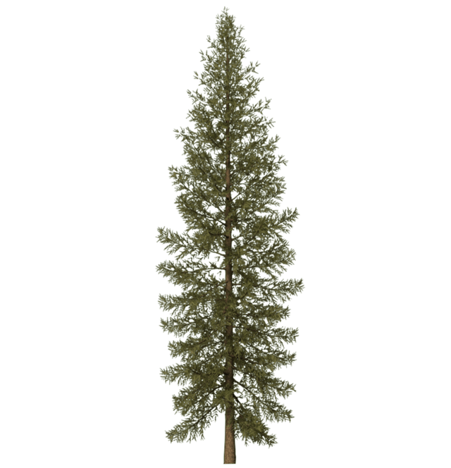 10 Tree Png Images Free Cutouts For Architecture Landscape Interior Renderings Part 2 Dzzyn Plante