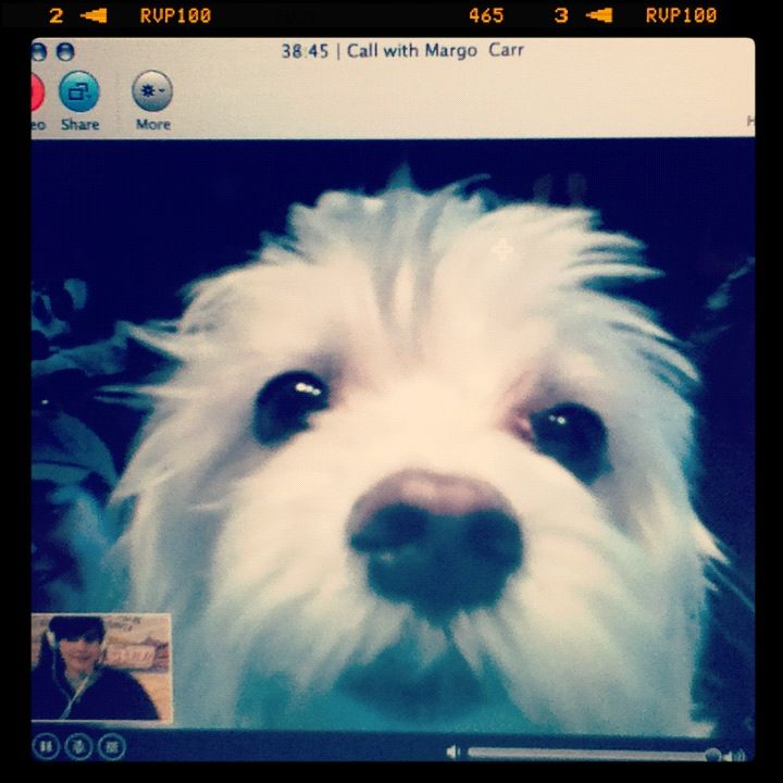 Margo's pup loves getting up close and personal via Skype whenever she's away.