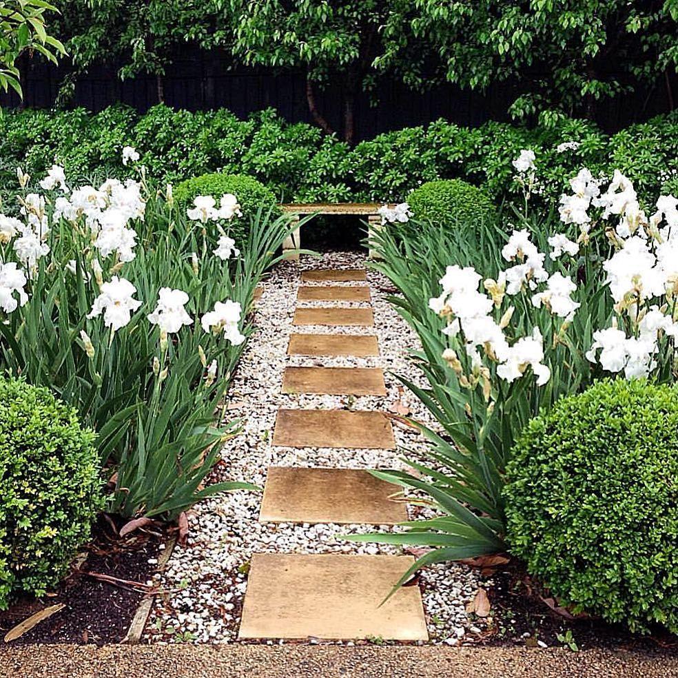 Iris Walk I Planted A Few Years Ago I Have Planted Iris Germanica Catch A Cloud En Mass Morningtonpeninsu Garden Design Outdoor Gardens Design Dream Garden