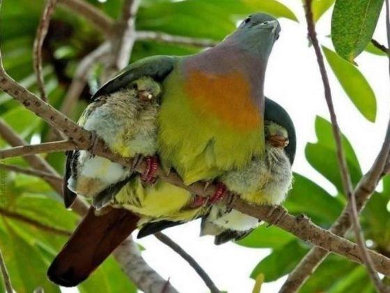 momma and baby birdies