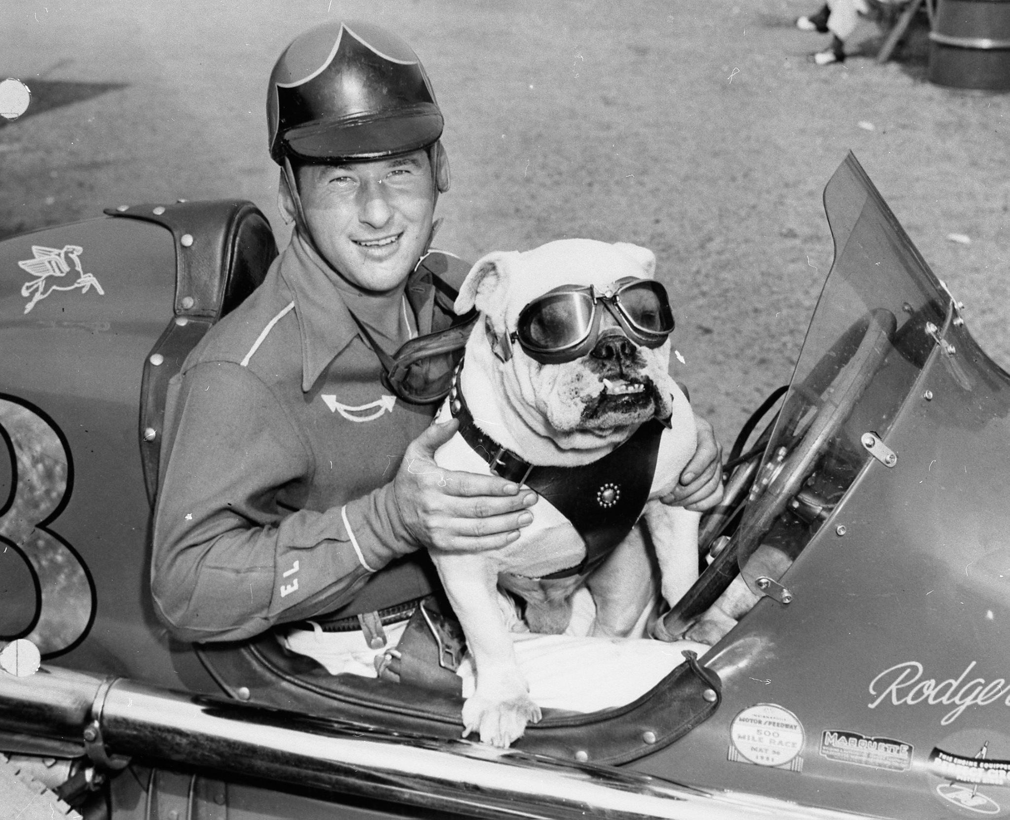 1951 Press Photo Rodger Ward At Indianapolis 500 With His Bulldog