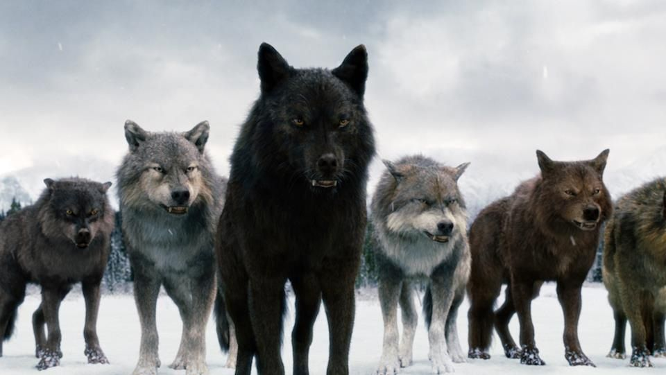 Twilight wolves - the only good thing about the twilight saga! and I