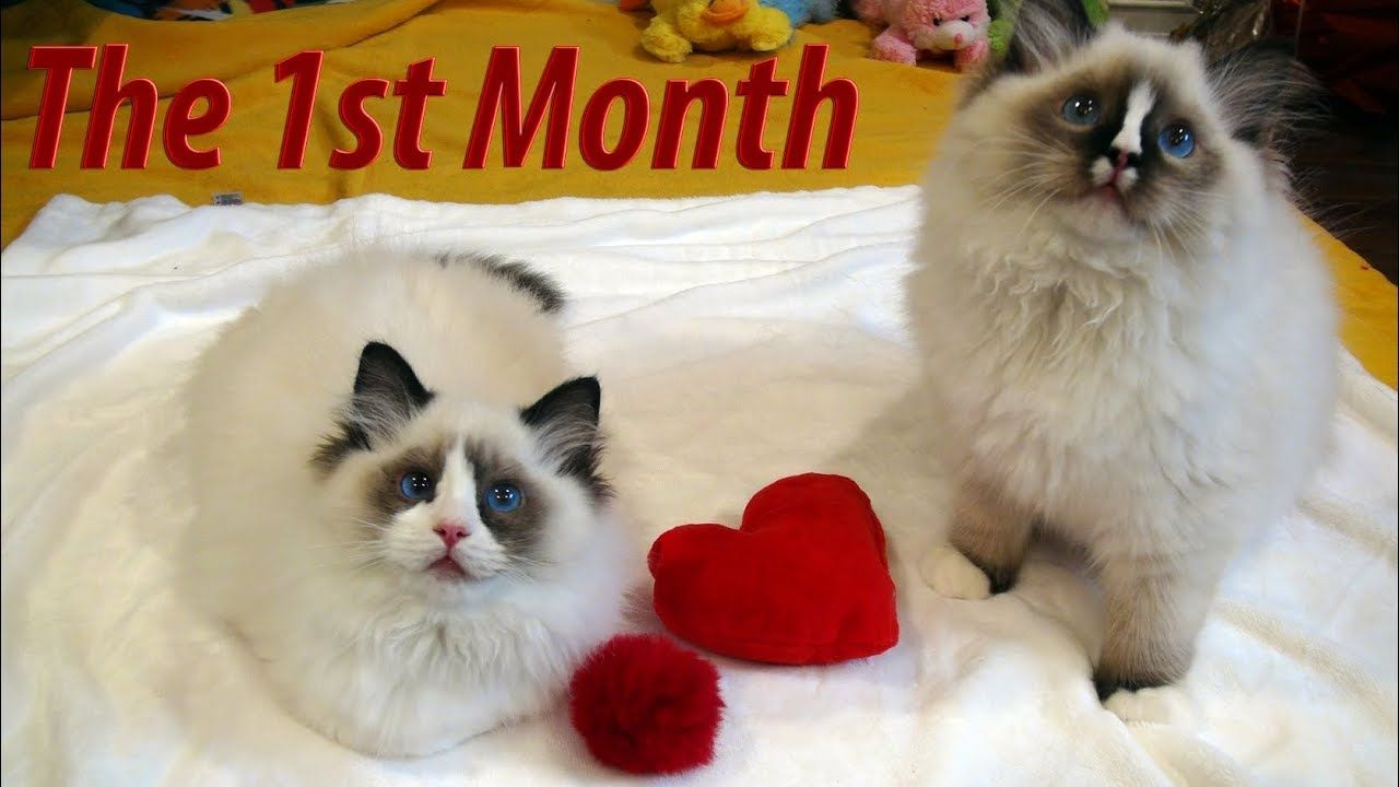 Rosey S Kitty Vlog 17 1st Month With The New Kittens Kittens Cute Kitten Gif Kitty