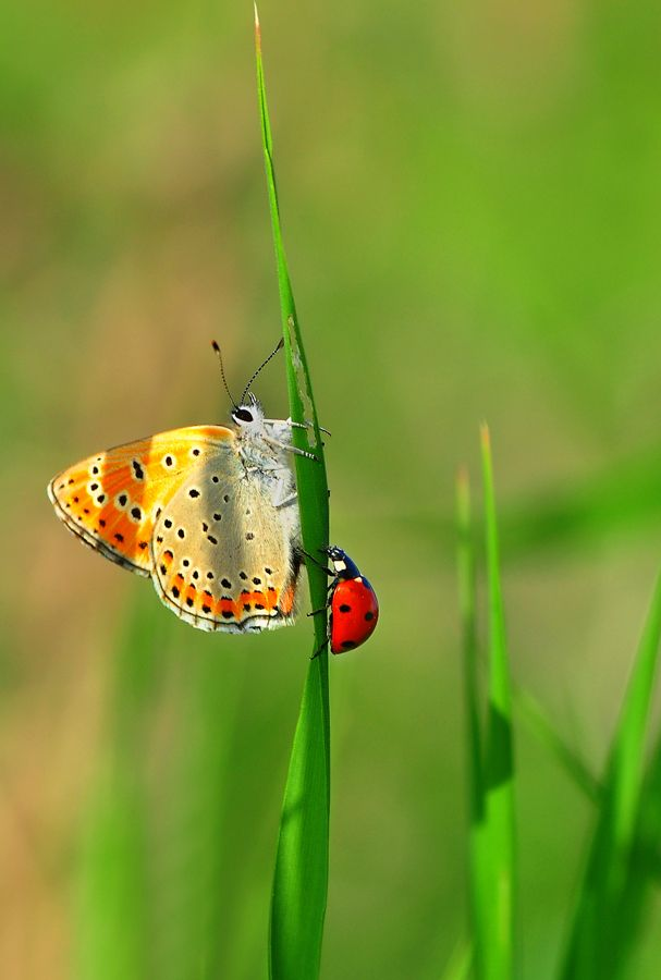 Friends Ladybug Butterfly Beautiful Butterflies Beautiful