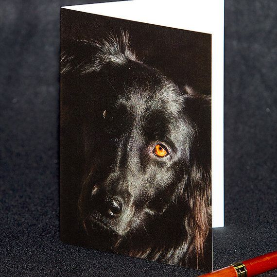 Black Dog Dog Lover Photo Greeting Card by TanyaDeLeeuwPhoto Dogs around town