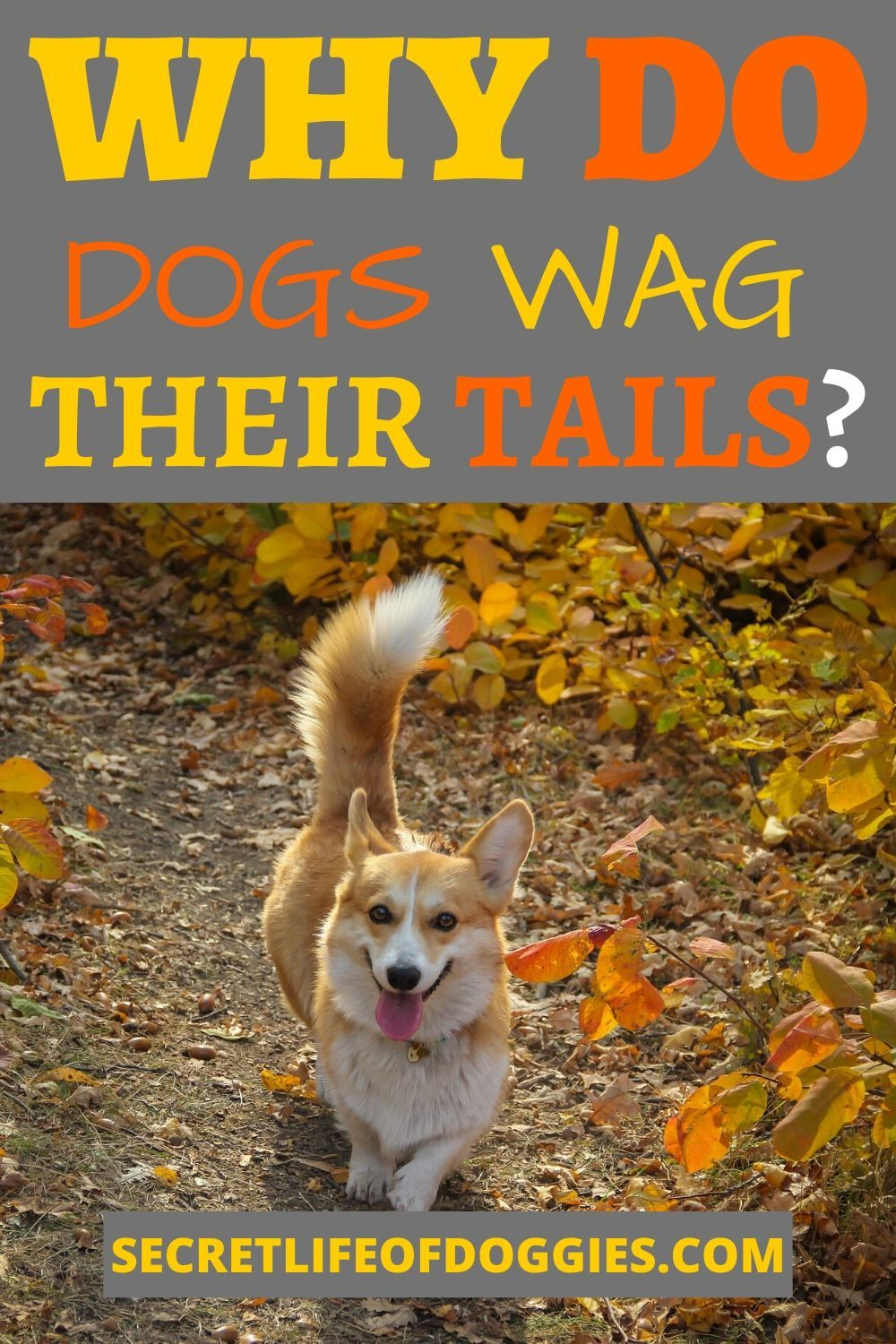 Why Do Dogs Wag Their Tails In 2020 Funny Dog Toys Working Dogs Breeds Best Dog Toys