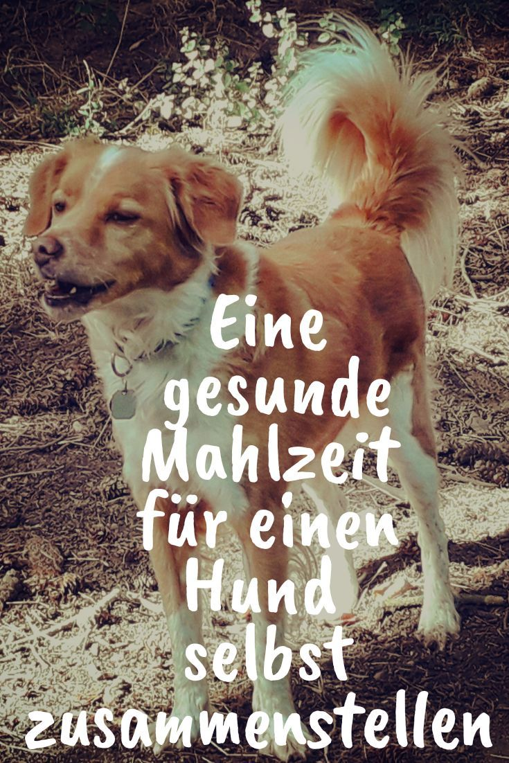 Make A Healthy Meal For A Dog Yourself Blogposts Herzenshund