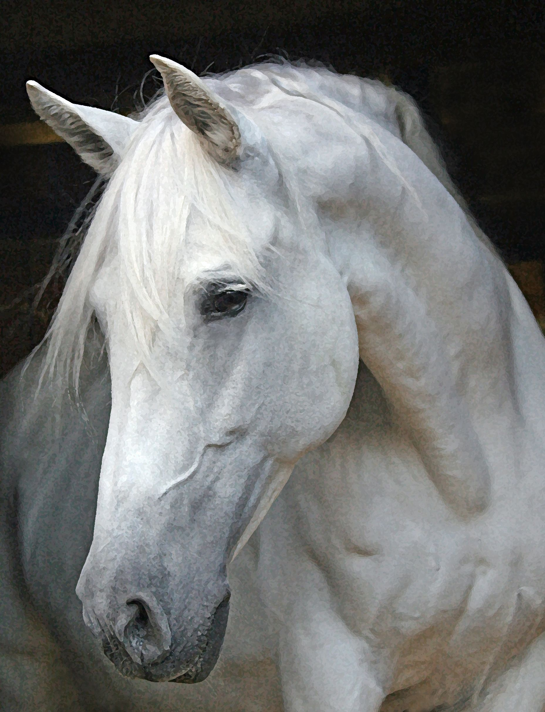 Horse Face Profile | The Windflower Weekly: Tica, My Andalusian Mare ...