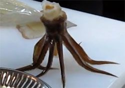 Guy, I move? Build leg activity, twitch of squid squid caught on the fly