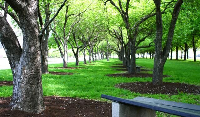 Sustainable Cities Article Chicago Converting Vacant Lots To Greenery Sustainable City Eco City Landscape Architecture