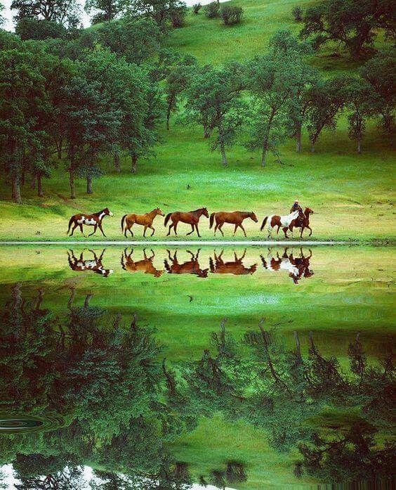 Ber ideen zu fototapete pferd auf pinterest for Fototapete babyzimmer