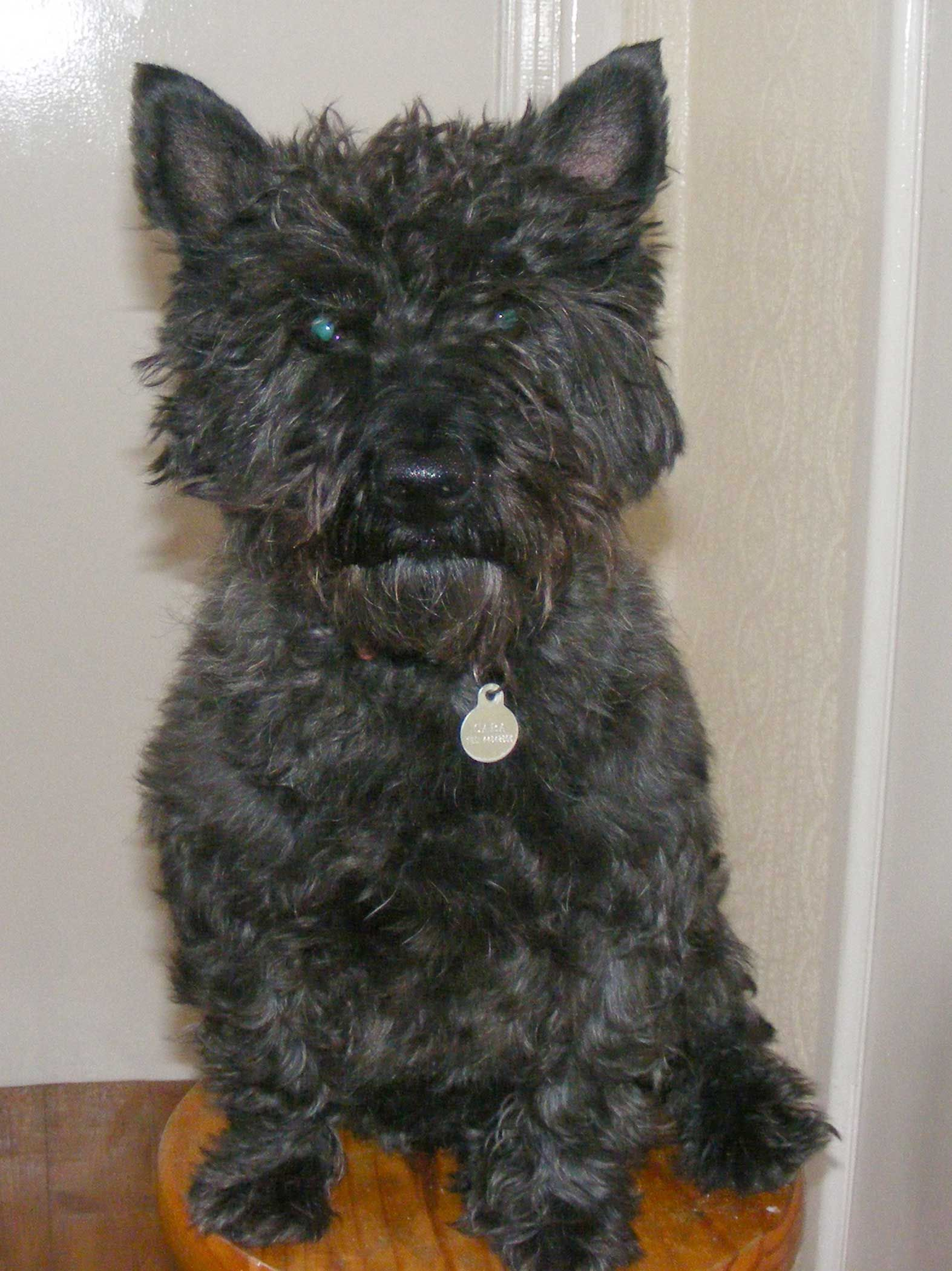 West Highland Terrier Mix Puppies It looks like Raven