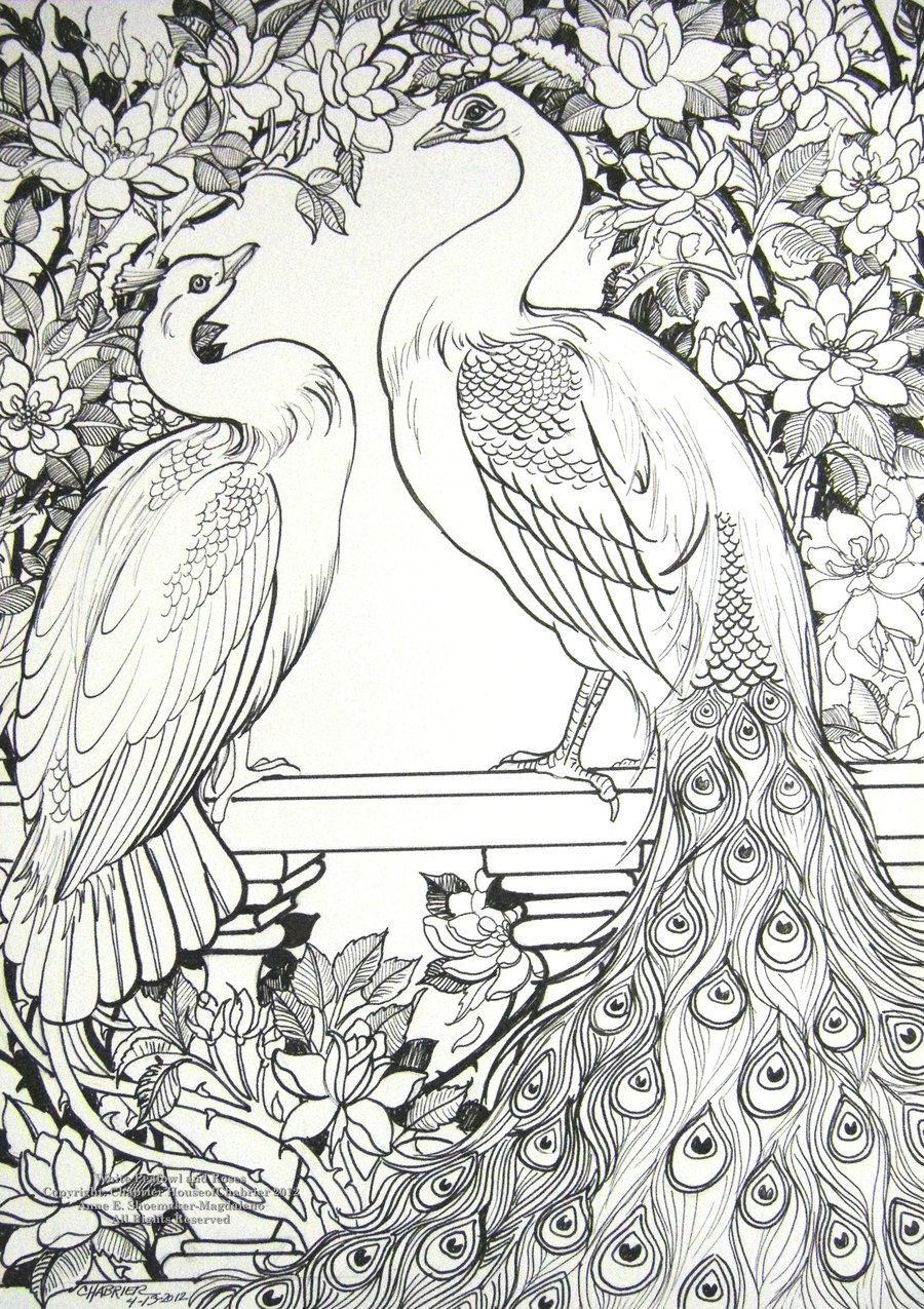 white peafowl and roses by houseofchabrier deviantart com on
