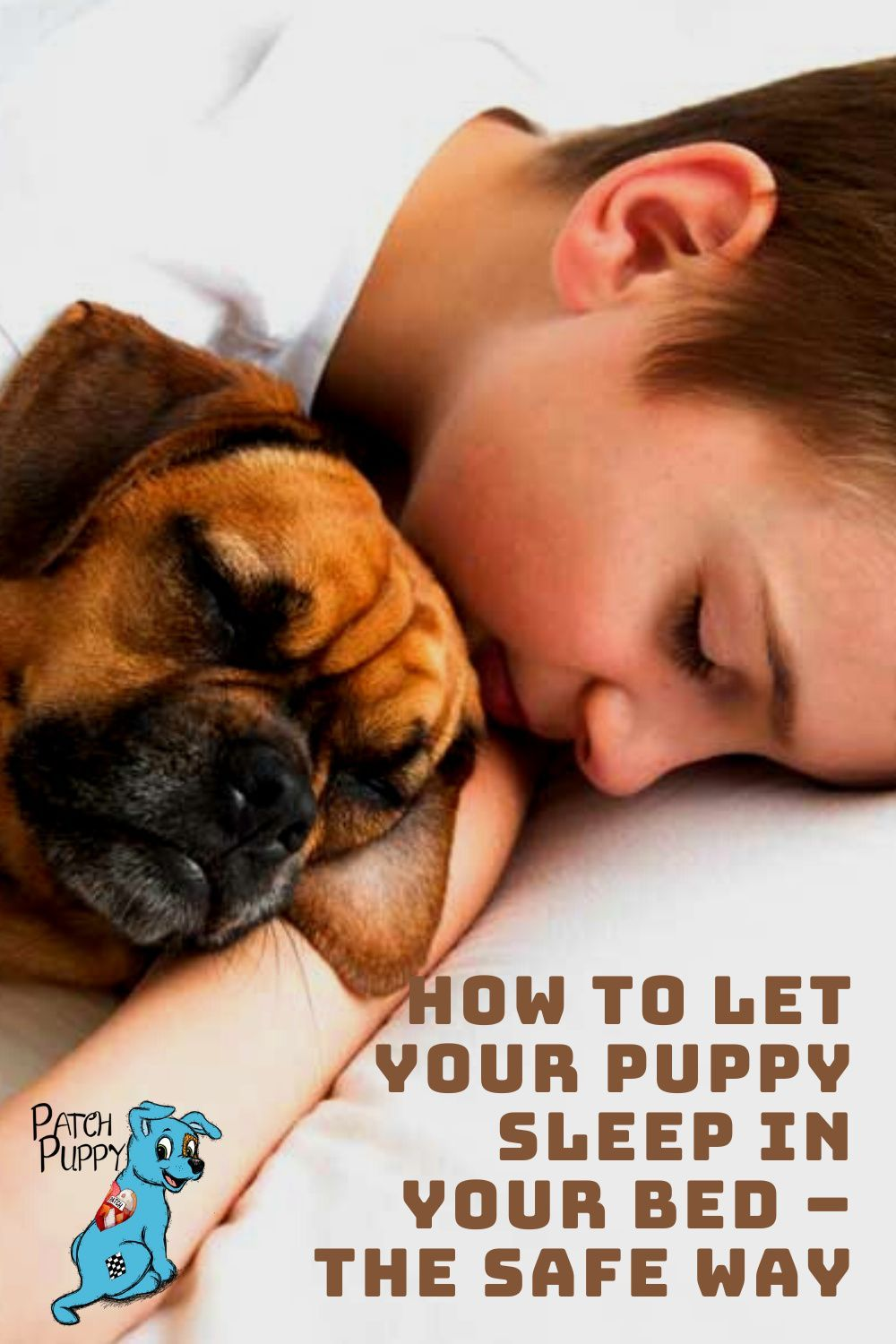 3f28a4c1fdd263288f7cad2d3dd6951c - How Do I Get My Puppy To Sleep In His Bed
