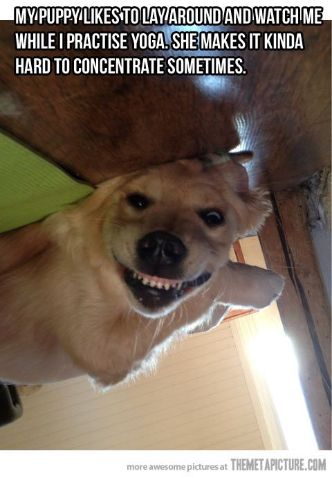 My Puppy Likes To Watch Me Funny Animals Funny Pictures Yoga Funny