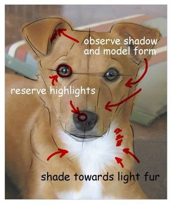 Here's How to Draw Your Dog's Portrait Using a Photograph