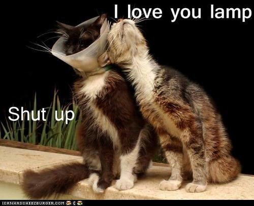 **LOL!!!....lamp!!**  Google Image Result for http://icanhascheezburger.files.wordpress.com/2012/06/funny-pictures-lamp-love2.jpg